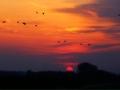 Vanaf de moricaanseweg een mooi avondrood dit weekend met wegtrekkende vogels. - Foto: Ferry Krauweel