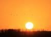 Mooie zonsondergang gemaakt vanaf de rand van Strijen ( Strienemonde ) richting het ondergaande zonnetje. Foto: Ferry Krauweel