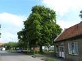 De bomen in Cillaarshoek staan er weer mooi bij zeker de circa 100 jaar oude linde. Foto's Arie Pieters