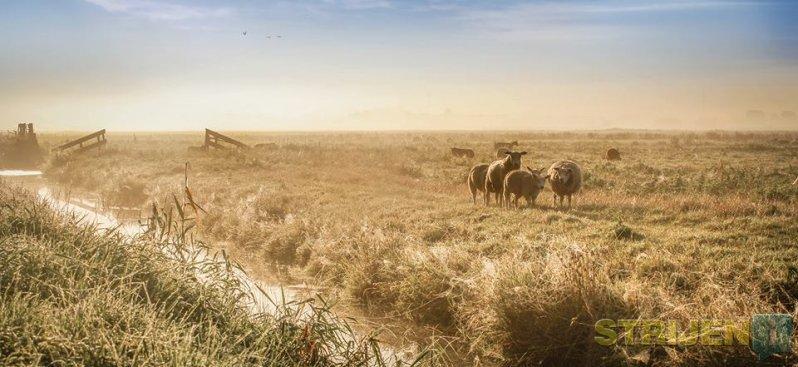 Foto van de week 37 - Jeffrey Groeneweg - Oudeland van Strijen vroeg in de ochtend.