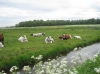 Foto van de week 28- het mooie polderlandschap van Strijen.  - Lenie van Eekelen.