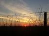 Foto van de week 40 - Een koude ochtend met een mooie zonsopgang boven de polders van Strijen. - Ferry Krauweel